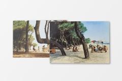 Pinus_Pinea_06