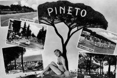 Pinus_Pinea_07